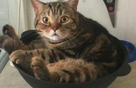 Die Tricks von Katzen, die uns dazu bringen, sie aus einer ganz anderen Perspektive zu betrachten