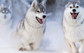 10+ животных в снегу, которые по-своему реагируют на морозную погоду