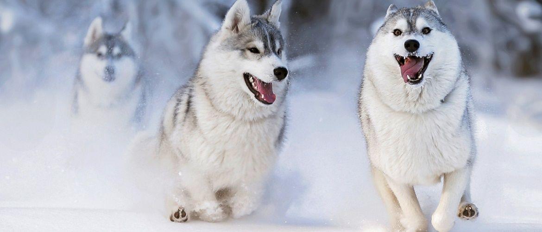 10+ тварин в снігу, які по-своєму реагують на морозну погоду