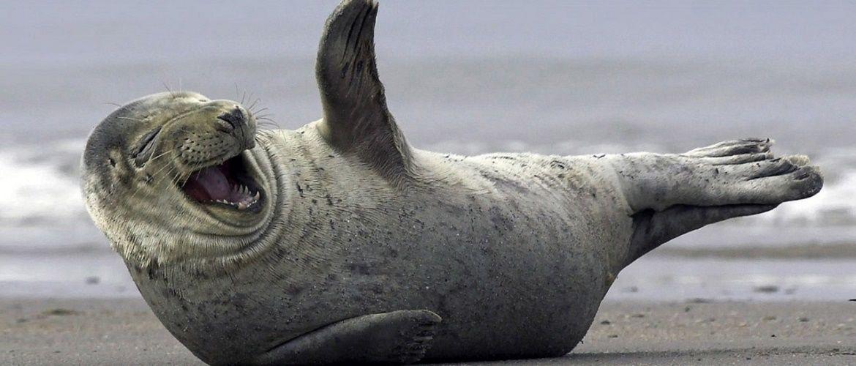 Найяскравіші приклади, як тварини вміють веселитися