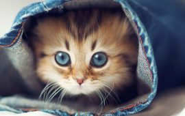 20+ cutest and funniest cats according to readers of Joy-pup