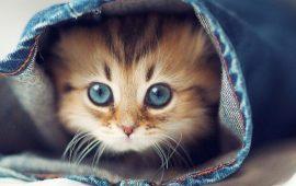 20+ самых милых и забавных котиков по версии читателей Joy-pup, которых так и хочется потискать