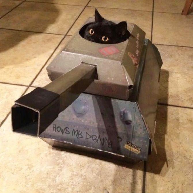 кошка в танке