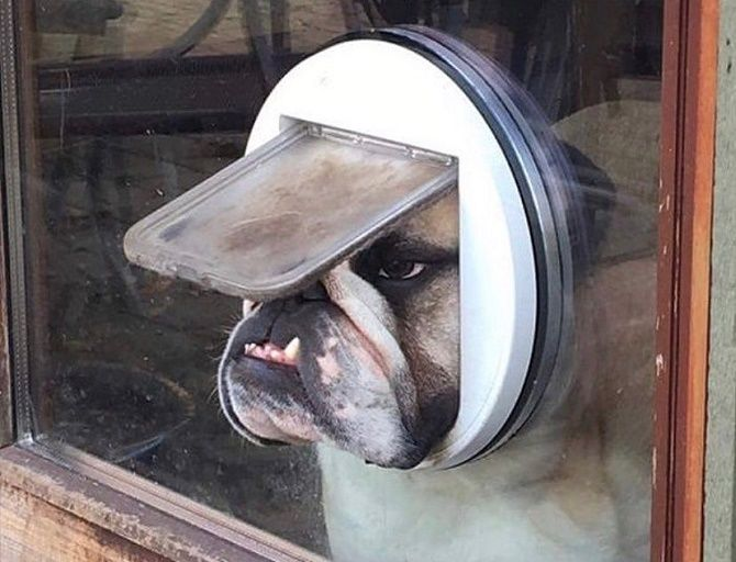 собака в вікні