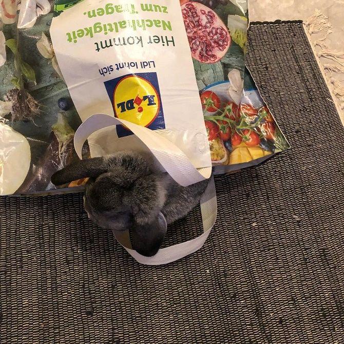 кролик в пакете