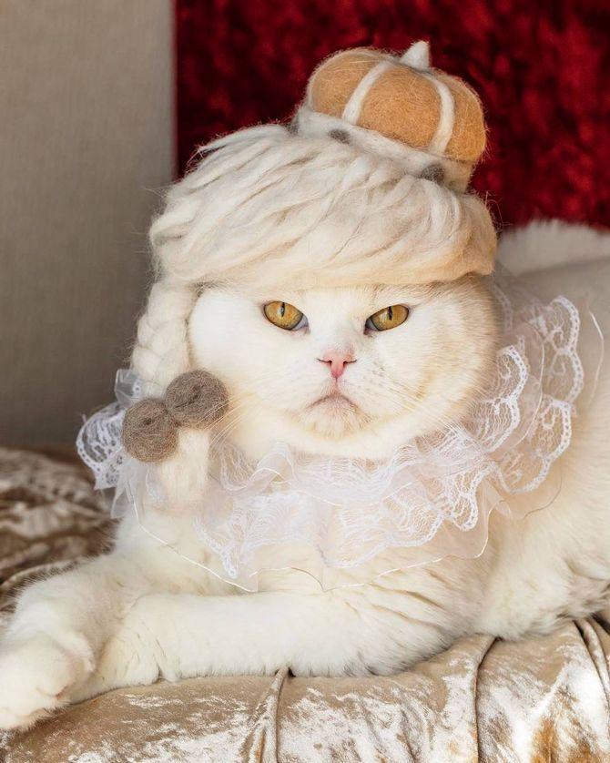 кошка царица