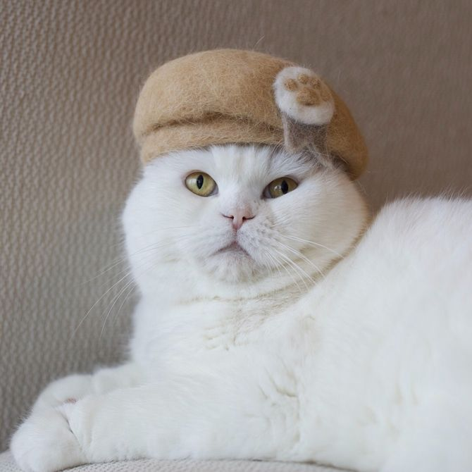 котик в берете