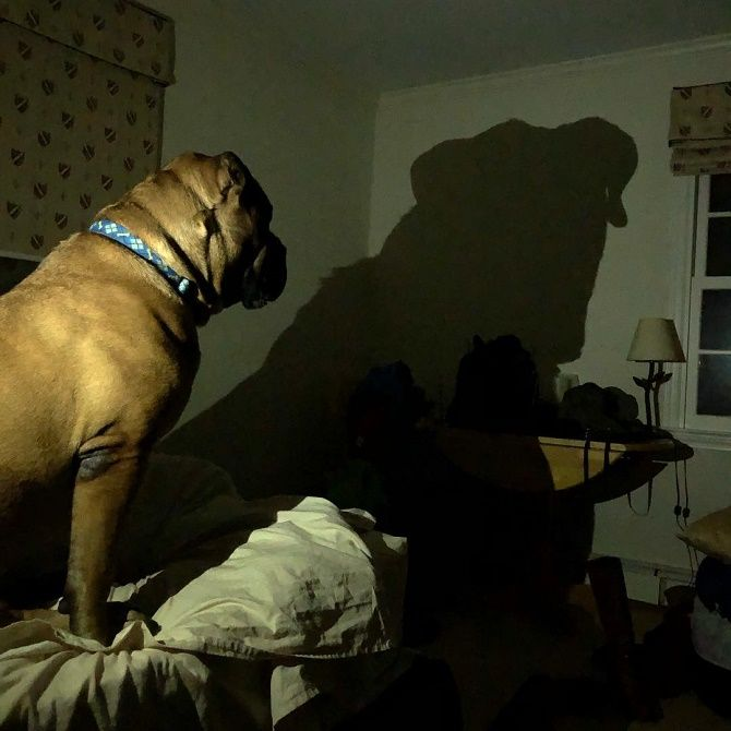 собака смотрит на тень