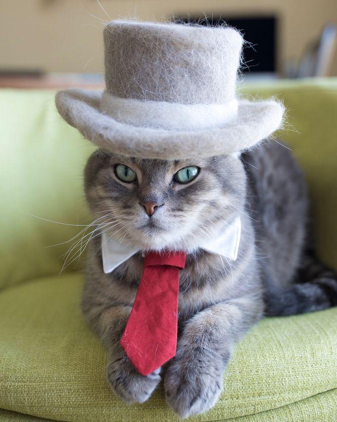 котик в цилиндре