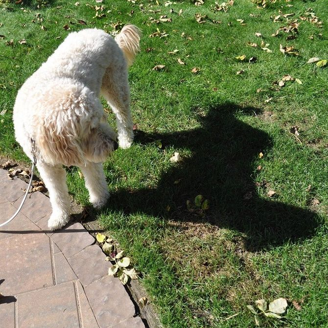 собака та тінь