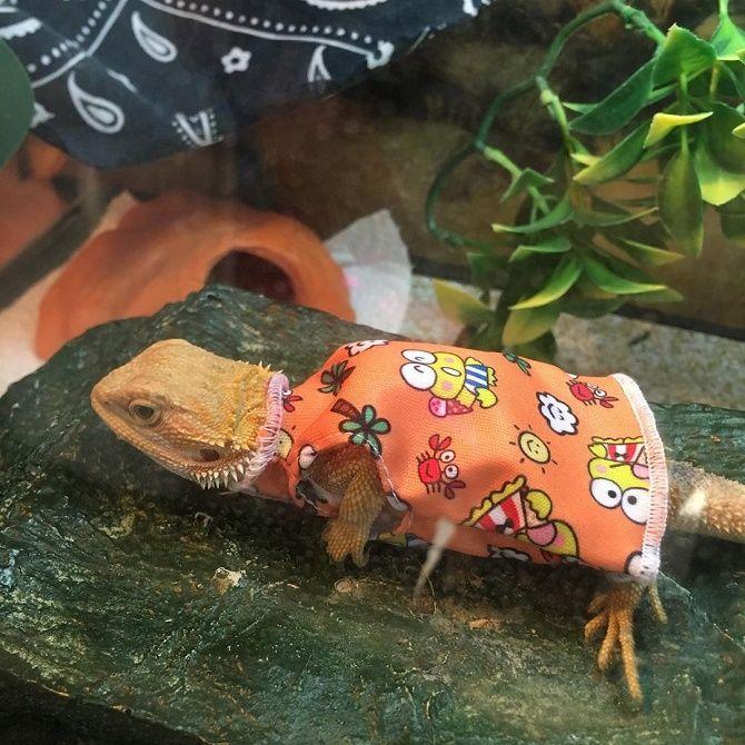 ящерица в одежде