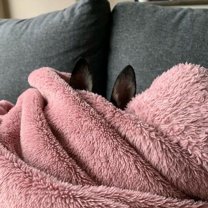 пес ховається