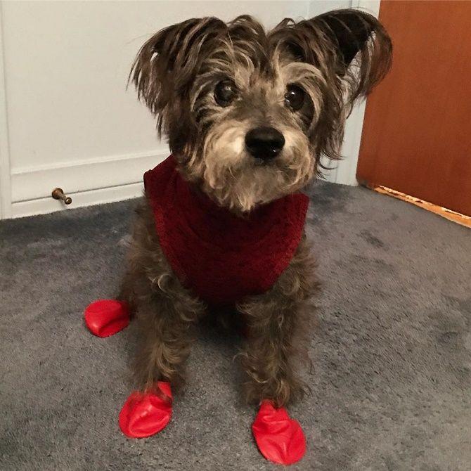 собака в тапочках