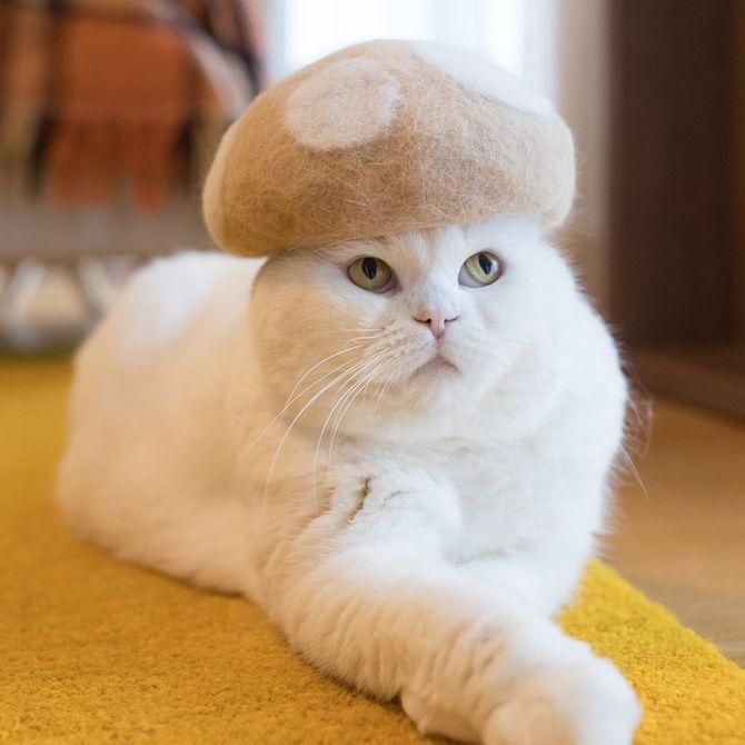 котик гриб
