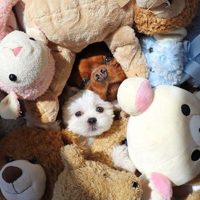 собака в іграшках