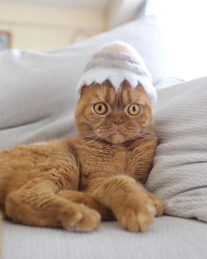 котик в яичке