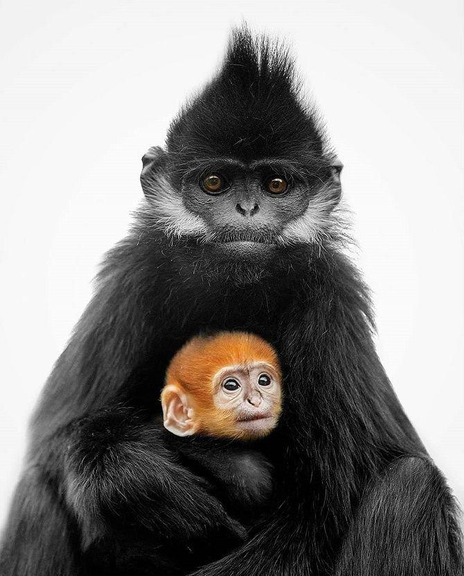 мавпа з дитинчатком