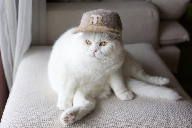 котик в кепке