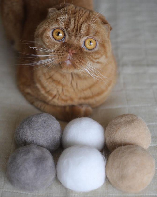 котик с клубками