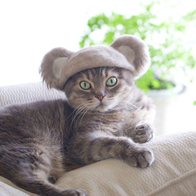 котик коала