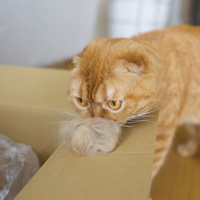 котик с коробкой