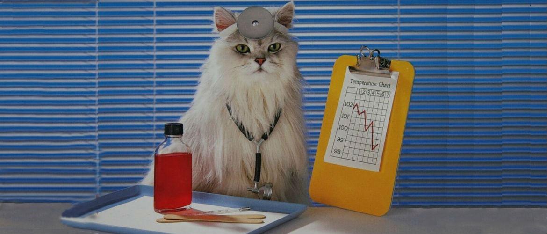 Почему коты полезны для здоровья