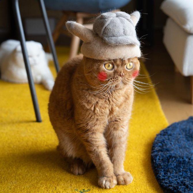 котик с шапкой