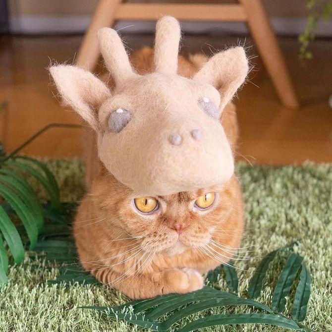котик козлик