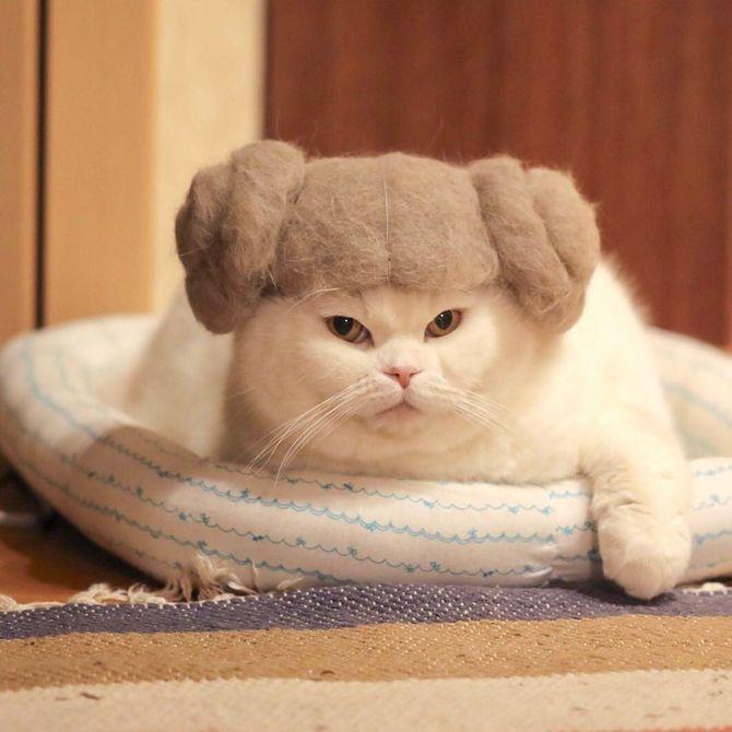 котик с прической