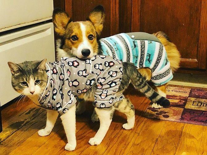 кот и пес в одежде