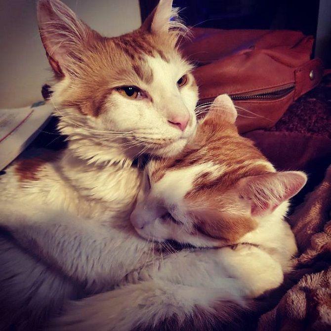 кішка захищає дитинча