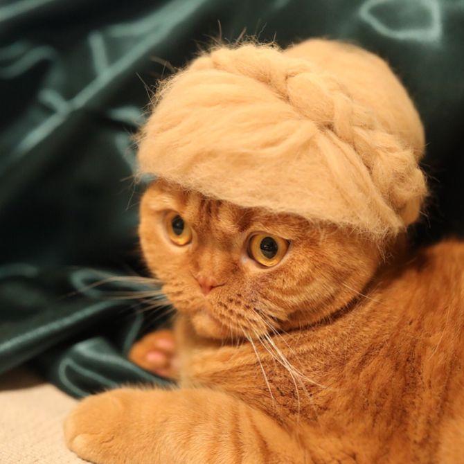 кошка мадам