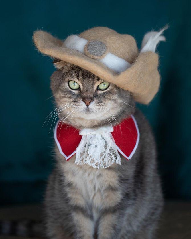 котик мушкетер