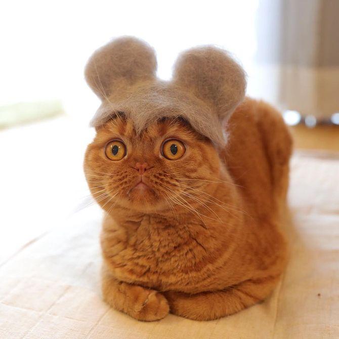 котик мышка
