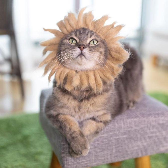 кошка подсолнух