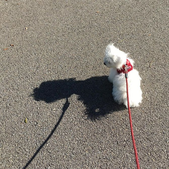собака боится тени