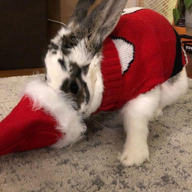 кролик в одежде