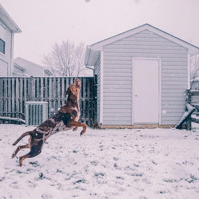 собака ловит снег