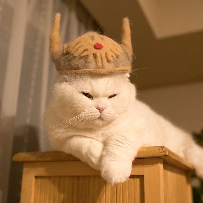 котик самурай
