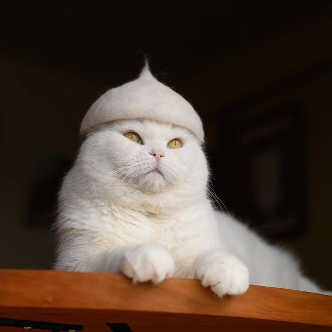 котик в шлеме