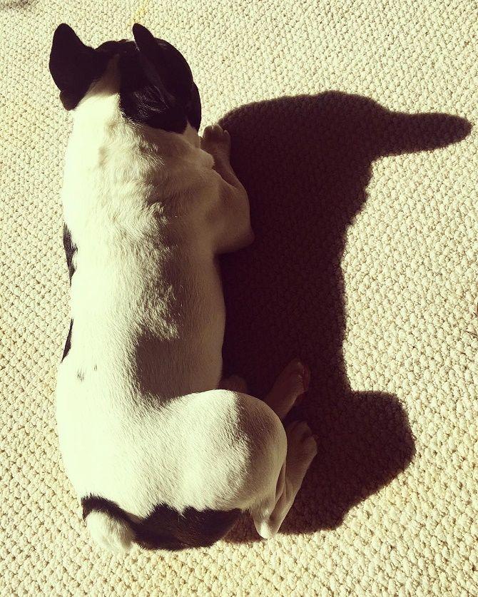 собака и ее тень