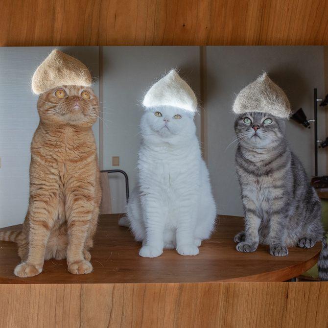 котики в шапках