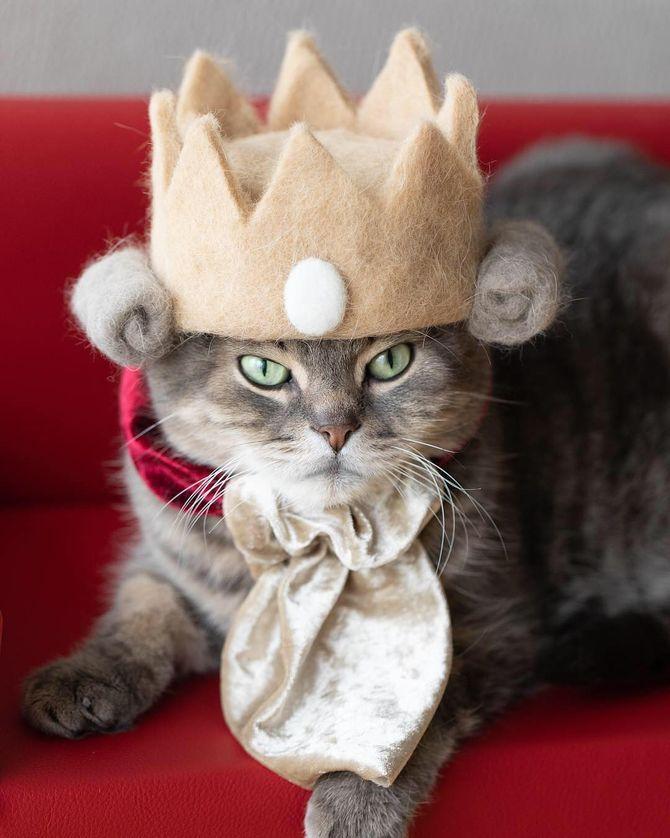котик царь
