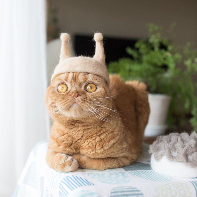 котик улитка