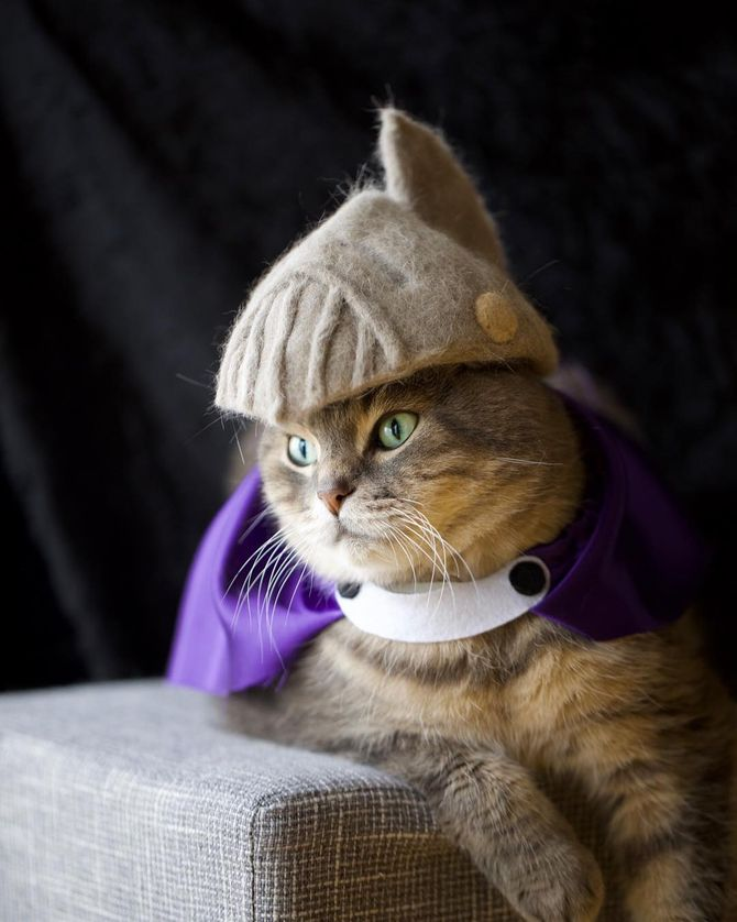 котик воин