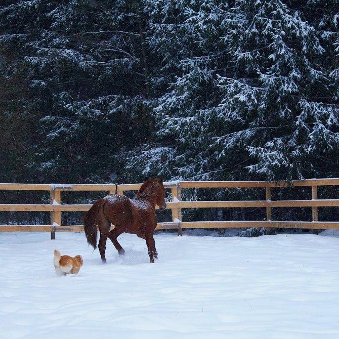 кінь в снігу