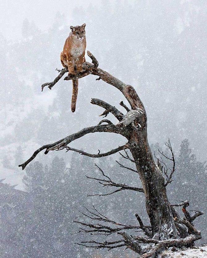 животные под снегом