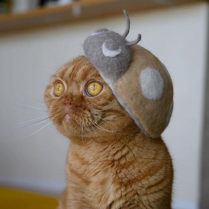 котик жук