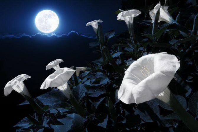 Каким будет Полнолуние в апреле 2020: лунный календарь, благоприятные дни 1