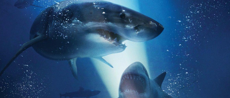 Top Haifilme, die dich gruselig machen